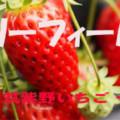 イチゴ狩りが・・・